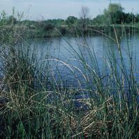 A constructed wetland with grass in the foreground.