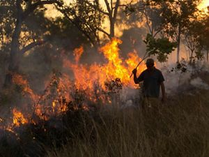 of savanna woodlands carried out by indigenous people on the Fish River Station in northern Australia