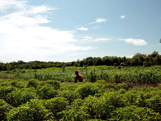 A worker in a milpa field in the Yucatan.