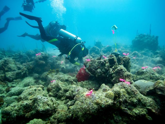 Divers swimming in unhealthy corals