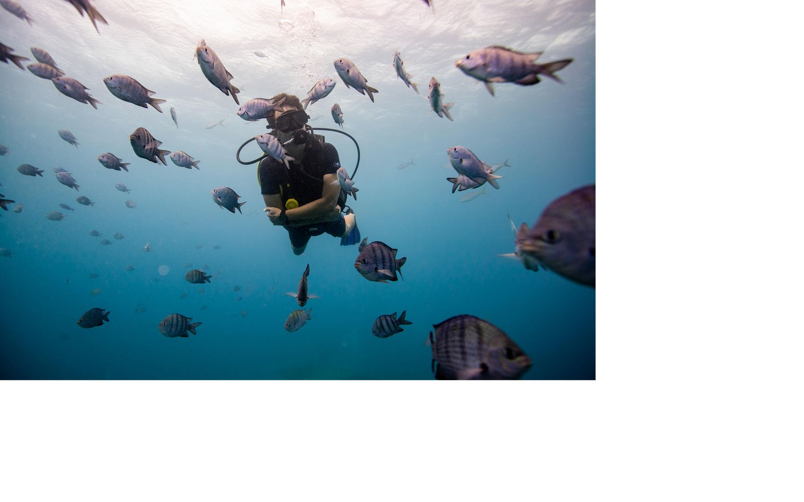 A diver in the Caribbean Sea.