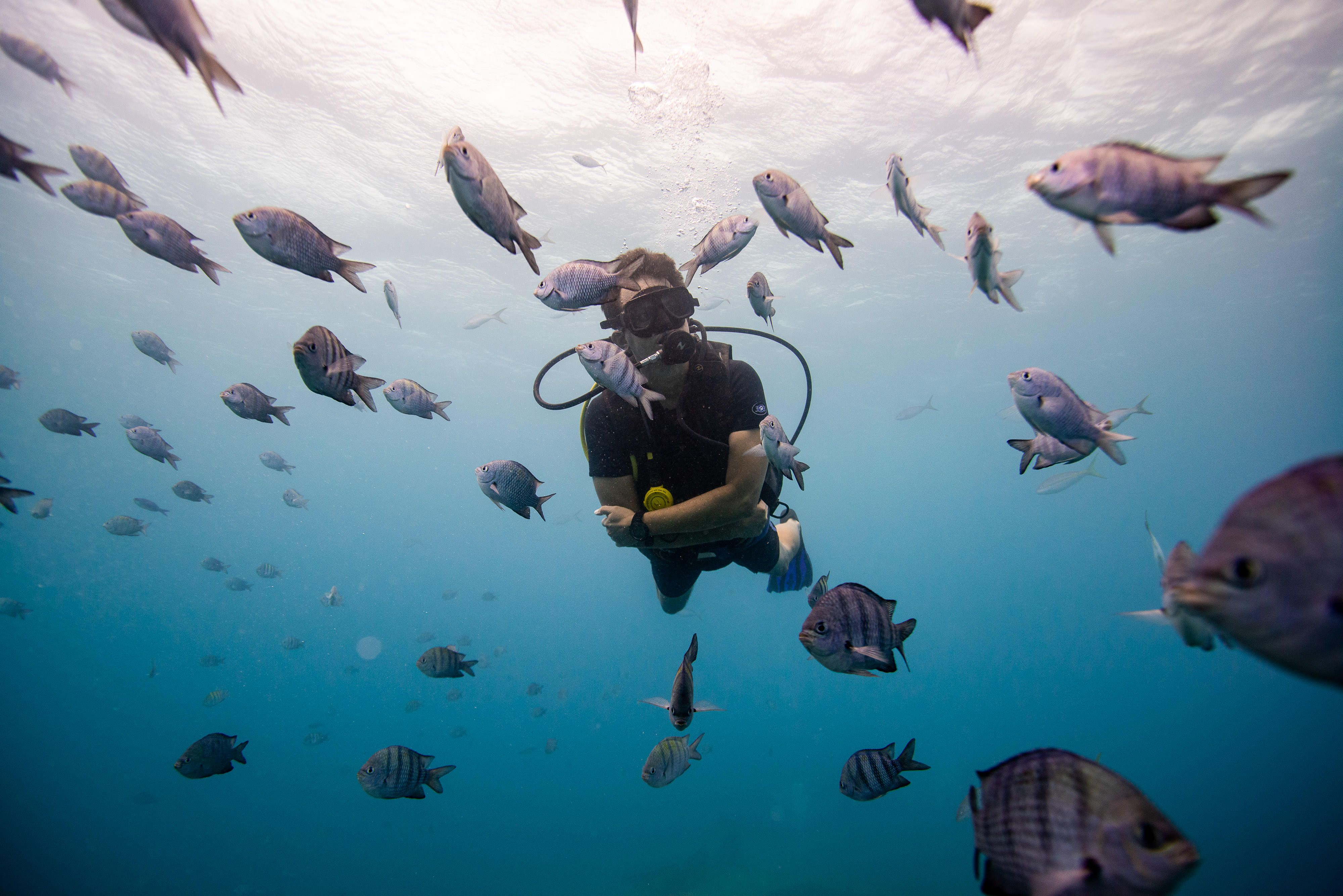 a diver surrounded by fish
