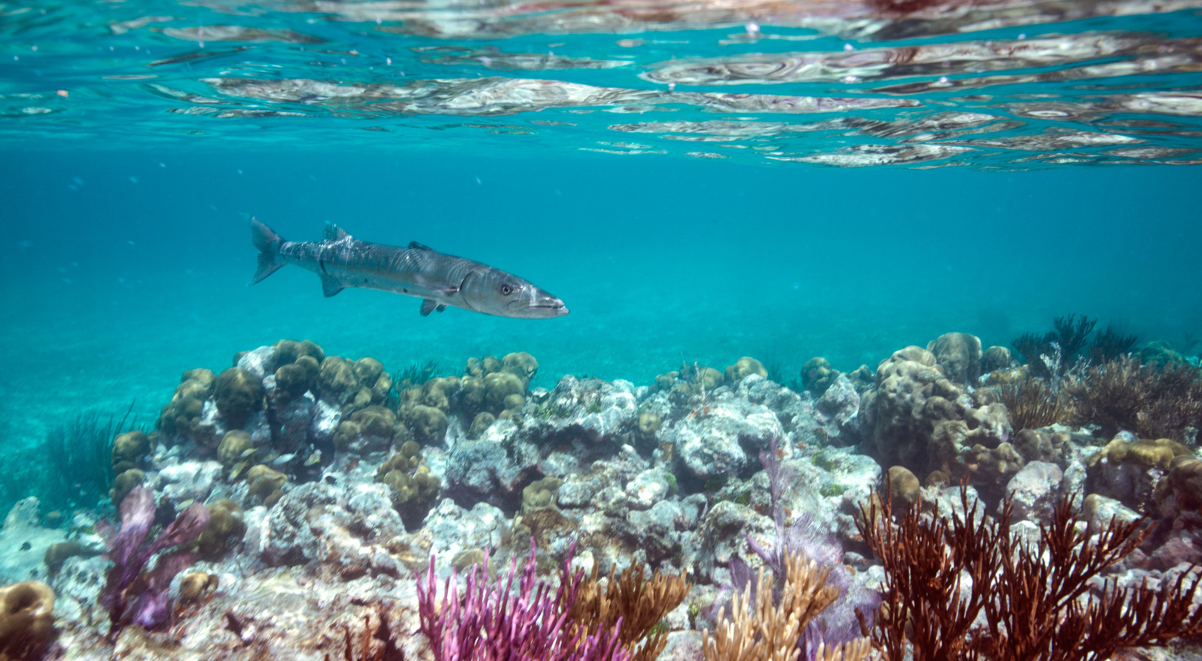 Coral reefs in Florida with fish swimming