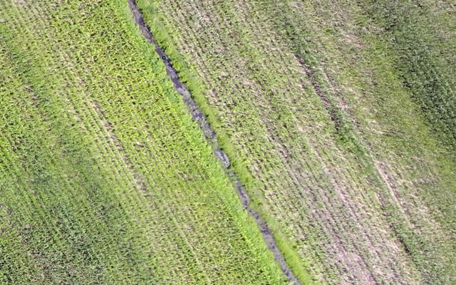 Corn fields shot by a drone with a multispectral camera.