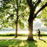 A jogger runs past a tree with the Charles River in the background.