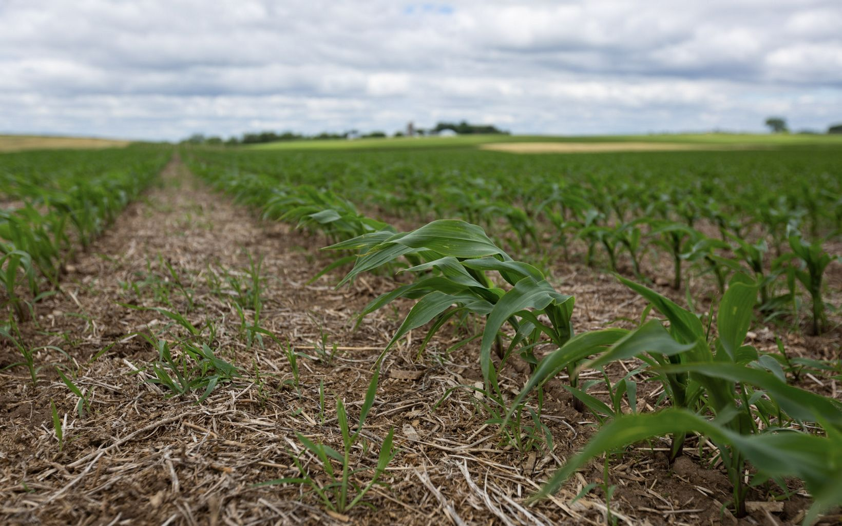 Closeup image of cover crops.