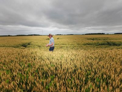 A farmer walks through a field of cover crops on a cloudy day.