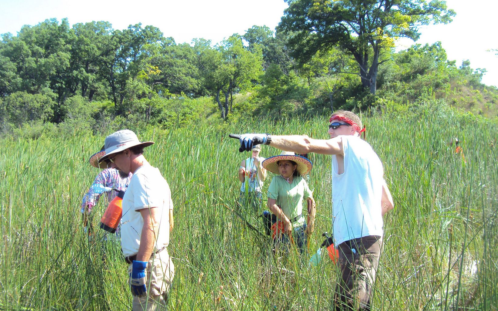 In sunglasses, work gloves and with a red bandana on his head, Craig Annen shows three young female LEAF interns where to start controlling narrow-leaf cattails.