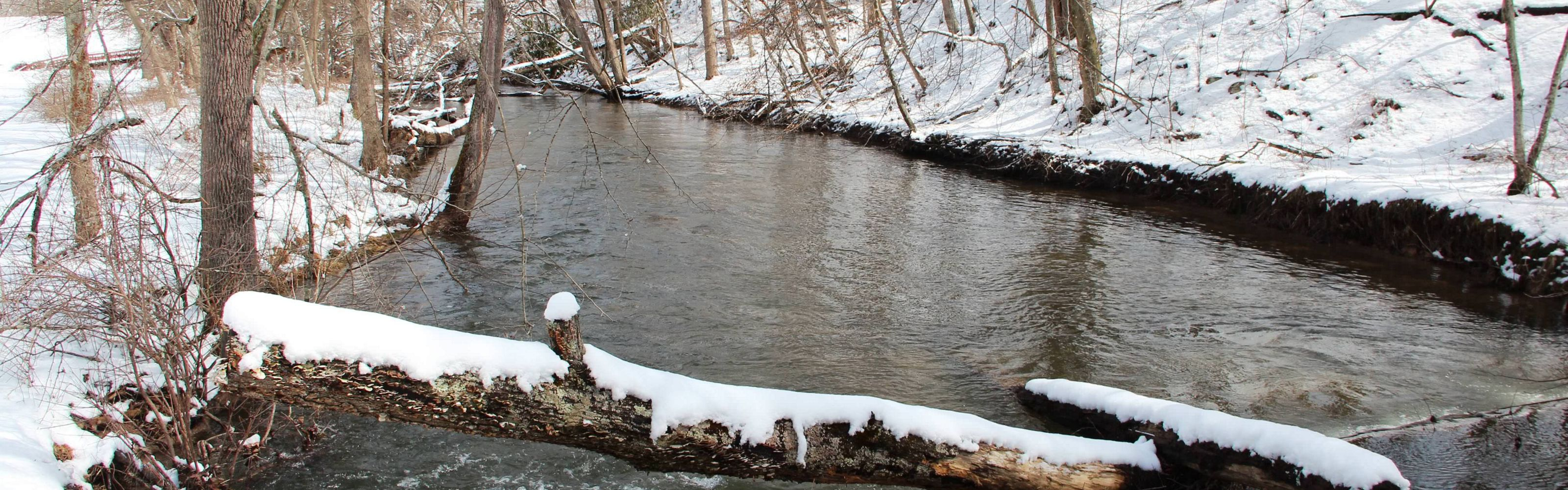 A creek flows through a snow covered forest.