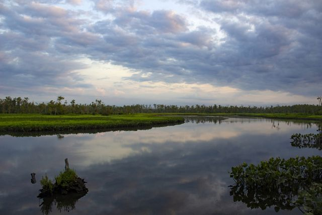 Low clouds hang over the still water of Holt Creek as dawn breaks. The banks of the wide creek are lined with marsh grasses.