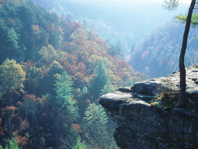 A dense forest with fall colors surrounds a rock outcrop.