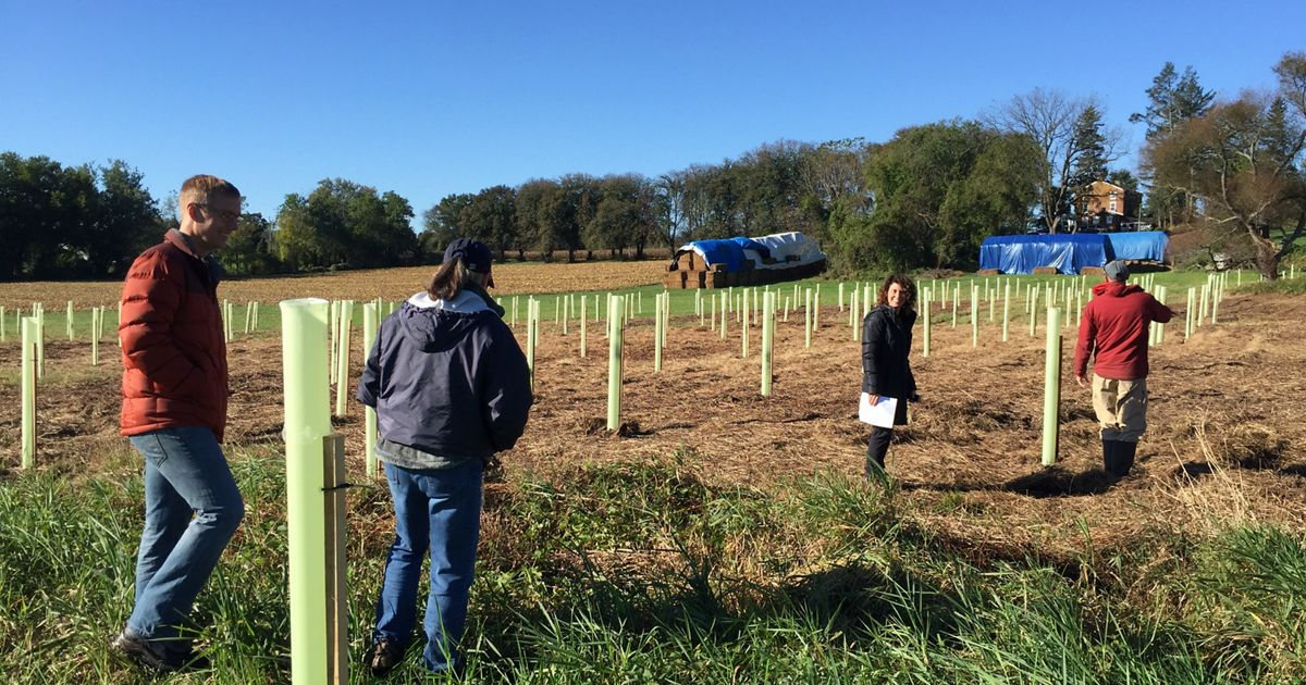 Two acres of trees were planted to buffer a headwater stream and reduce sediment and nutrients entering White Clay Creek—protecting drinking water for the City of Newark, DE.