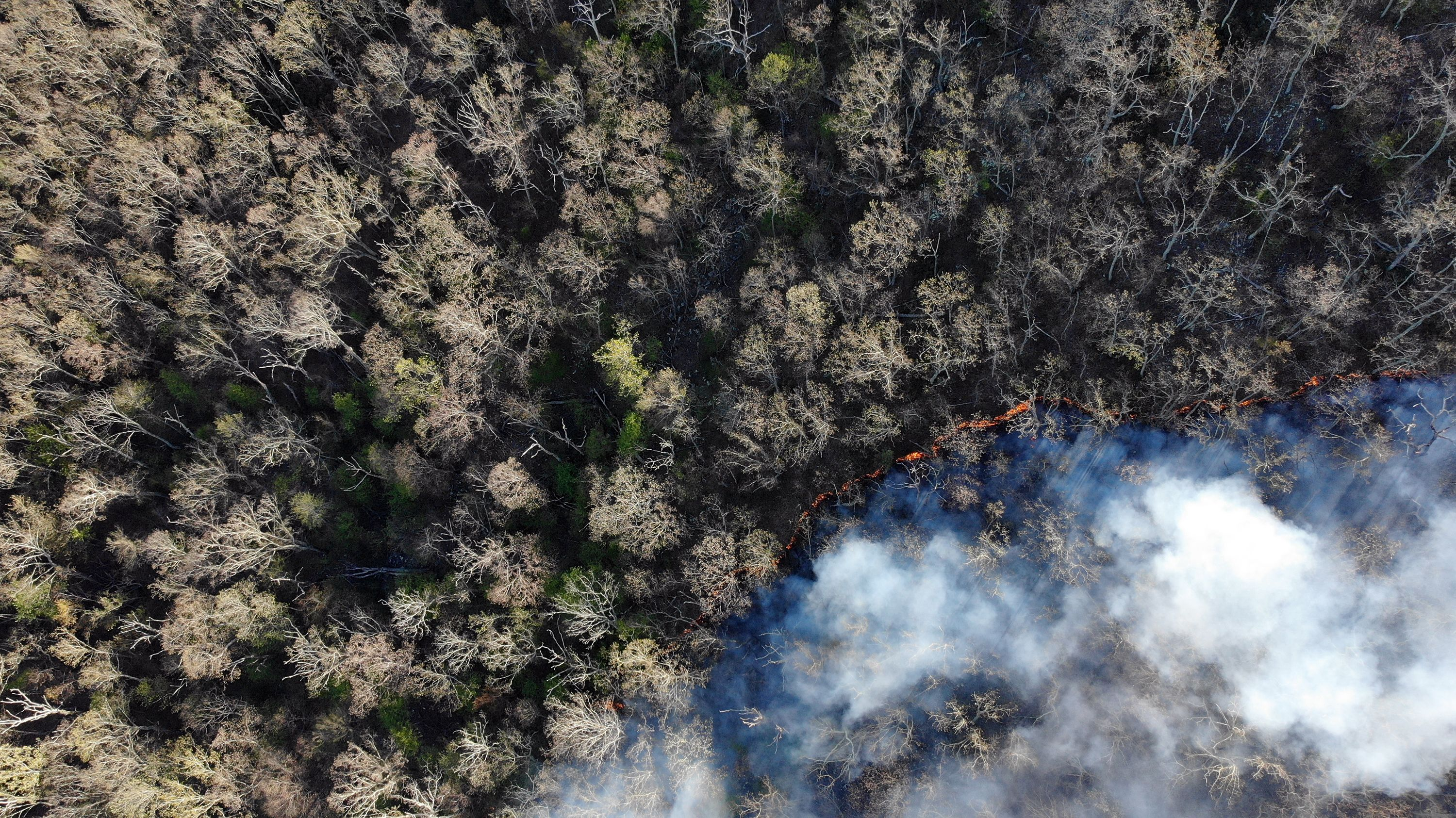 Aerial view looking down into a thick forest. White smoke rises from the thin line of orange fire that is advancing along the ground during a controlled burn.