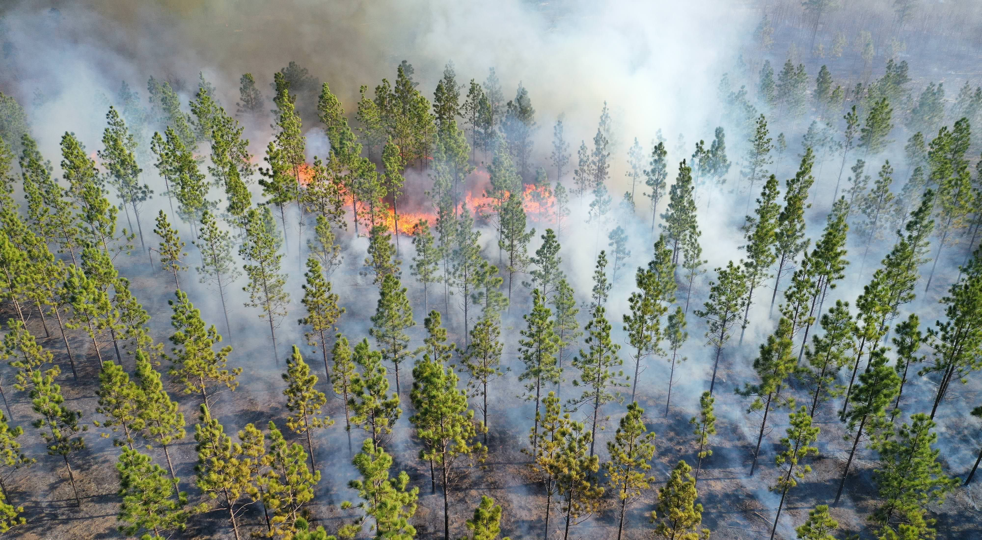 A controlled burn at TNC's Calloway Forest Preserve