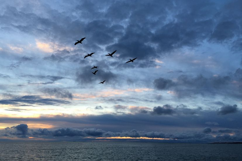 Sunrise over the Chesapeake Bay. A thin sliver of yellow is visible at the horizon between the gently lapping water and heavy, dark bank of clouds. Seven pelicans fly overhead in a V formation.