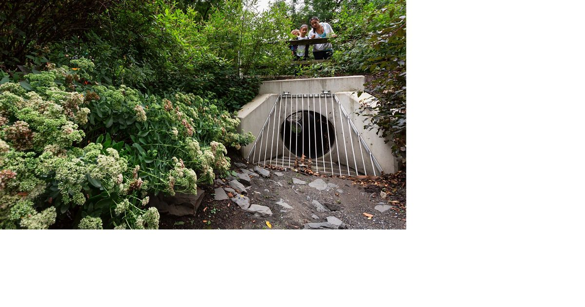 a culvert sitting under a bridge is surrounded by plant