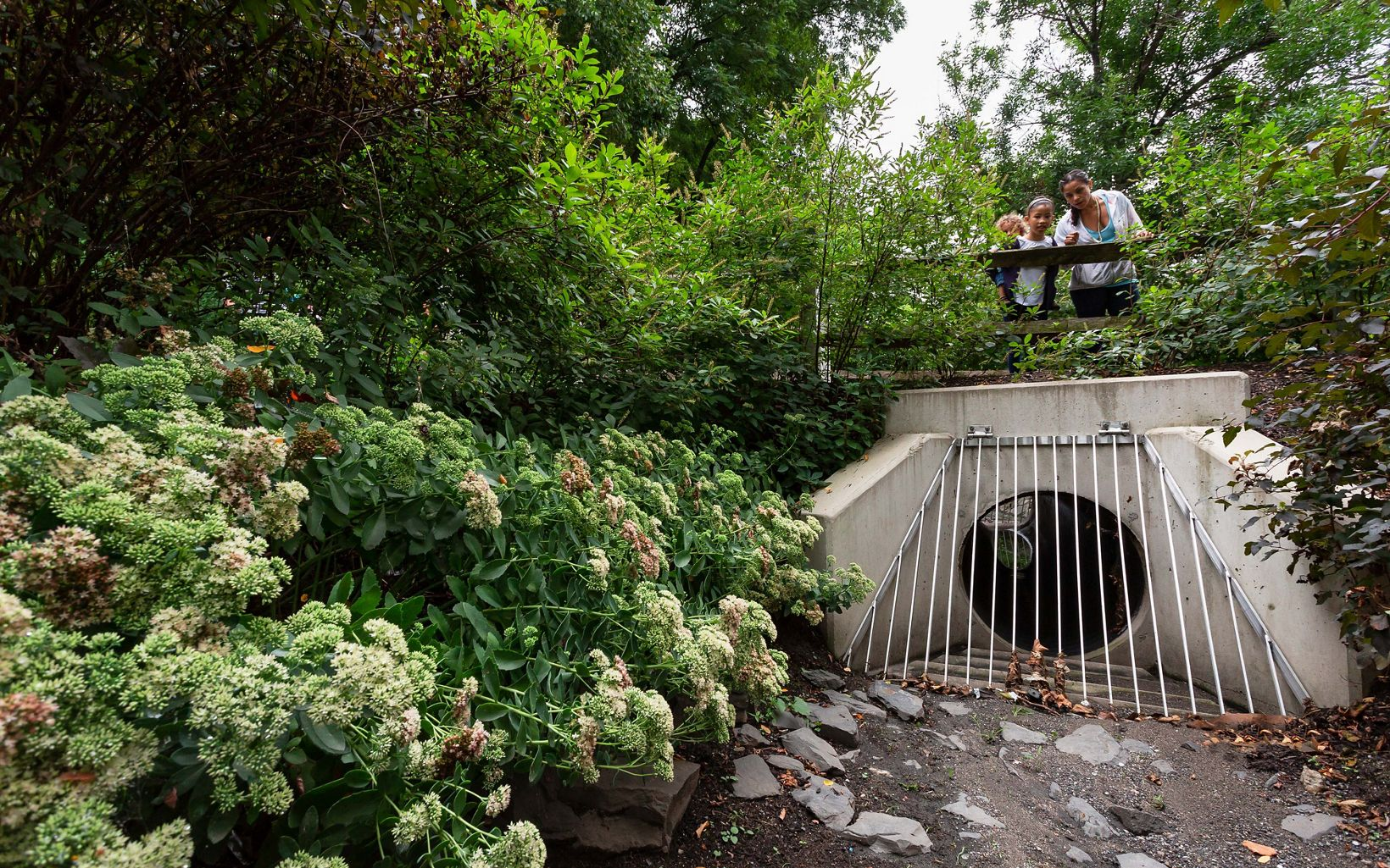 a culvert and bridge surrounded by plants and flowers