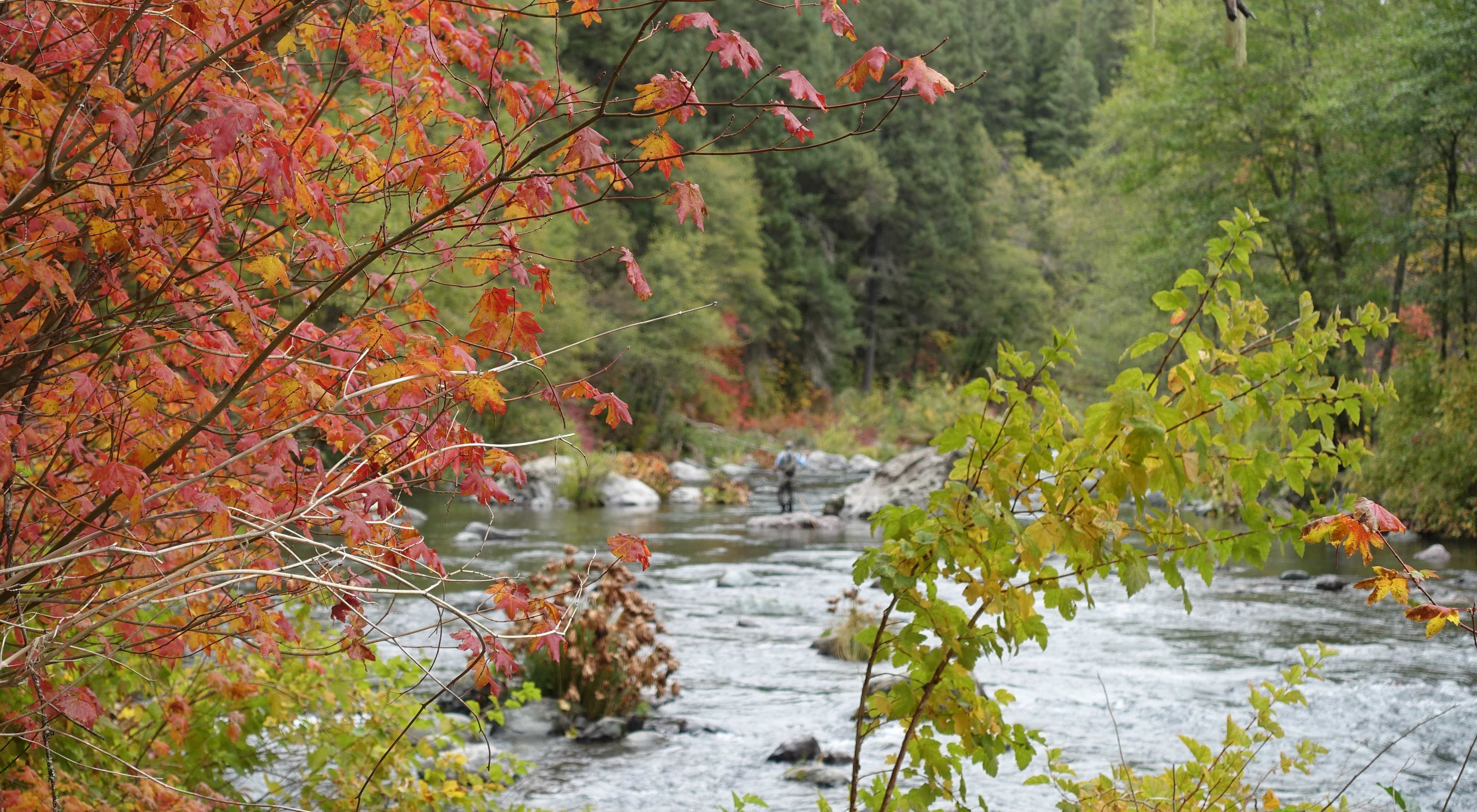 Fall foliage on trees on the banks of a river.