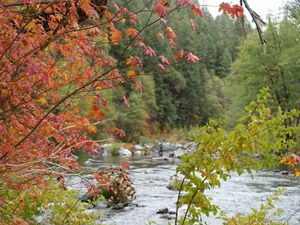 The Kerry Landreth Preserve at McCloud River: A Legacy for Nature and People