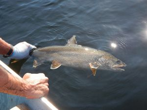 What can lake trout tell us about climate change?