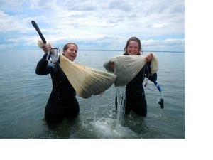 Volunteers hoist bags of eelgrass shoots.
