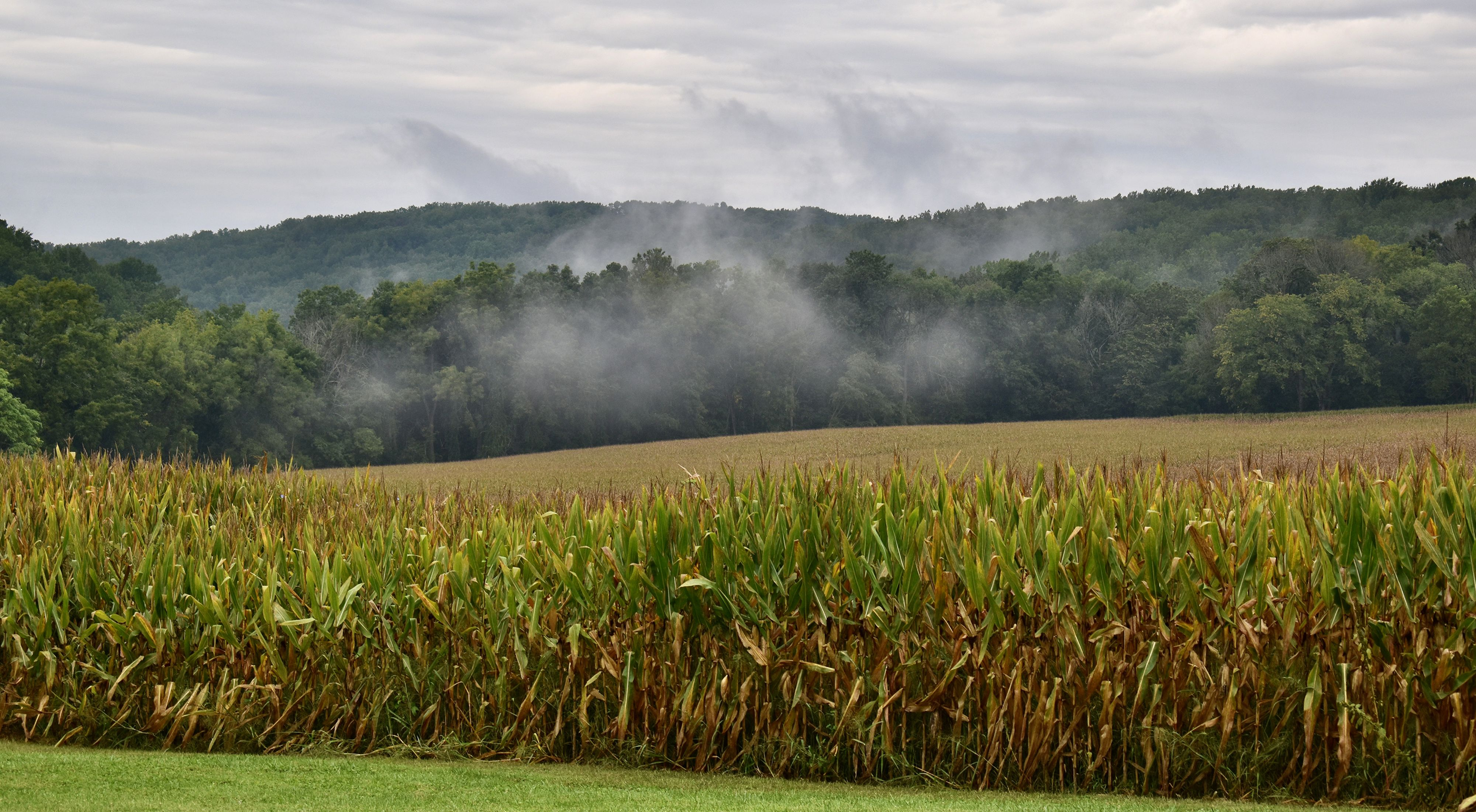 White mist rises from a green forested ridge that runs behind a farm field. Yellowing late season corn stands in the foreground.