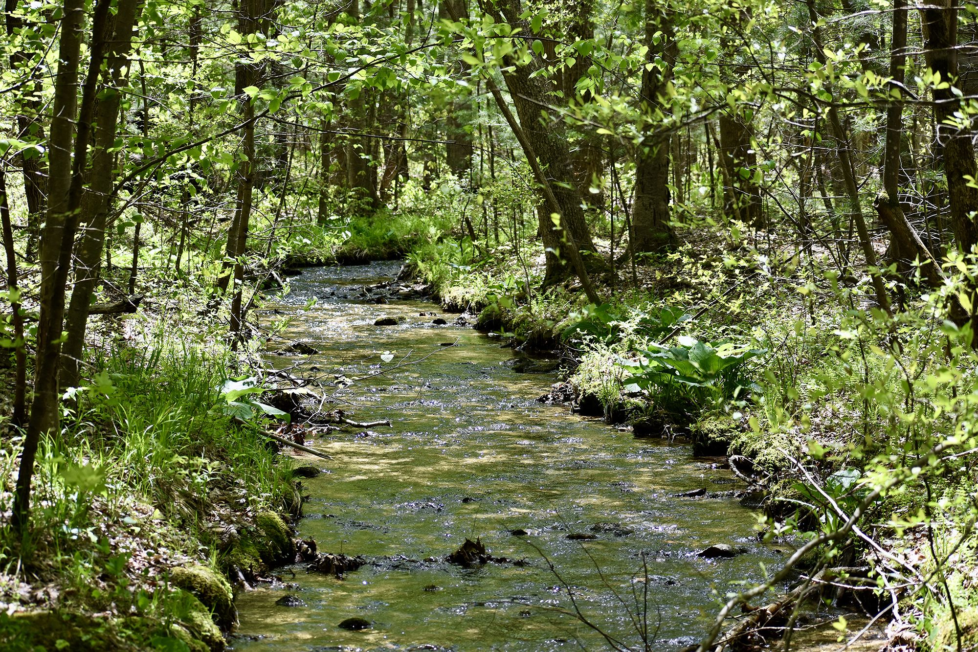 A wide mountain stream curves into the distance through a thick forest. The water ripples over stones and fallen branches.