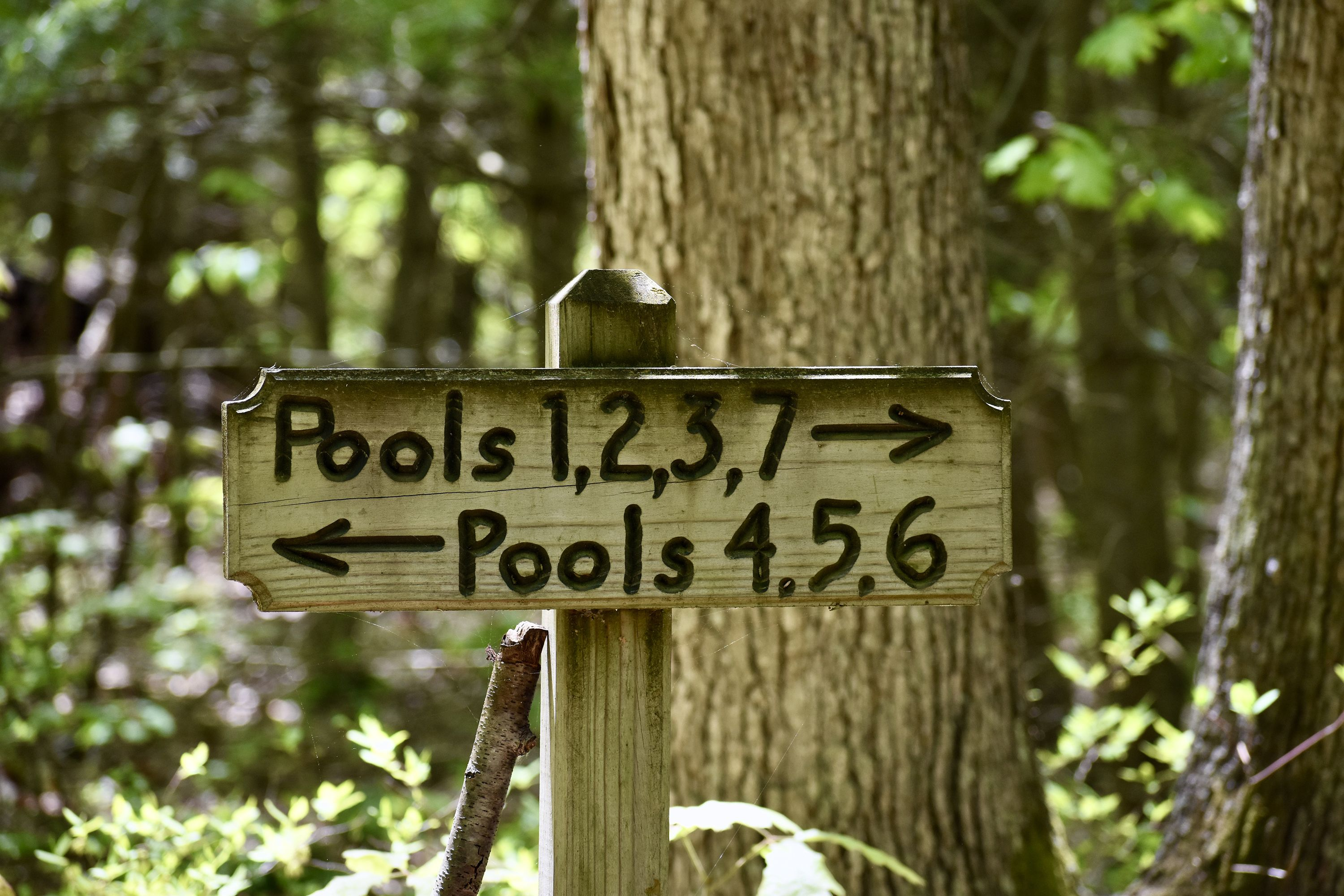 A wooden sign marks the way to seasonal vernal pools. Pools 1, 2, 3, 7 with an arrow pointing right is carved into the top of the sign. The bottom reads Pools 4, 5, 6 with an arrow to the left.