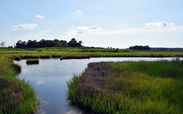 A wide flat channel of water curves through low green wetlands. A tall clump of trees stands out against the horizon in the background.