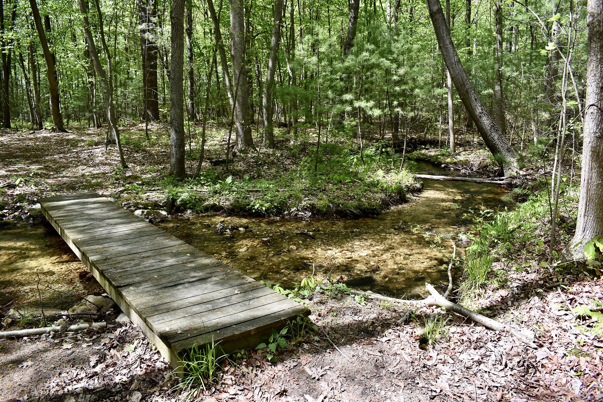 A wooden foot bridge crosses a narrow stream in wooded preserve. The shallow stream gently curves through the forest, bending off into the trees on the right. Sunlight dapples the leaf covered forest.