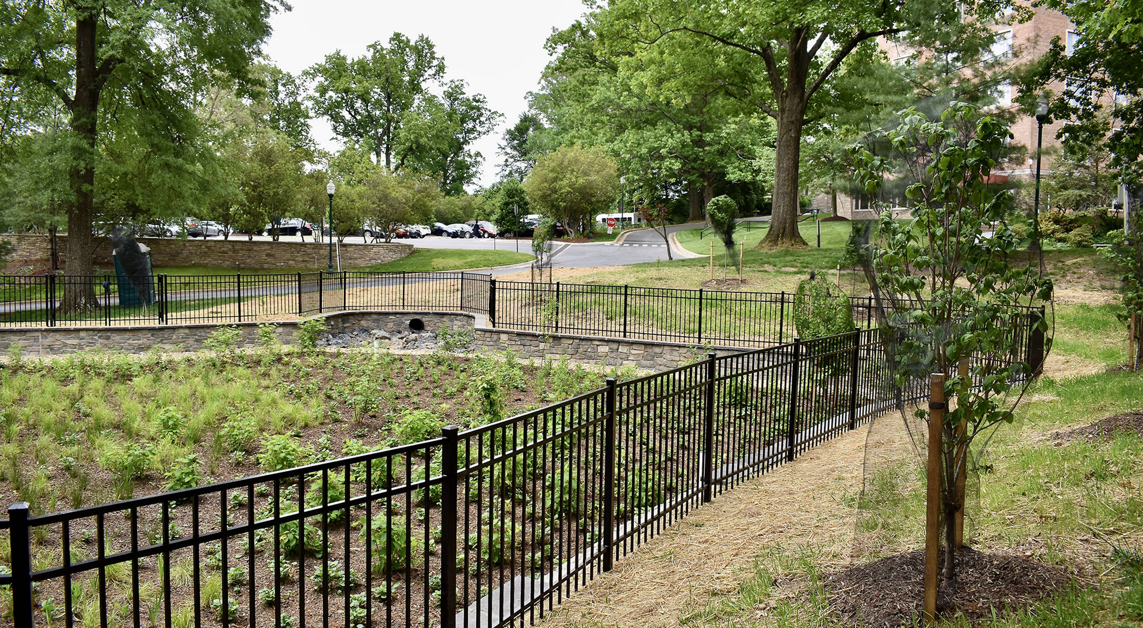 A newly planted rain garden sits at the bottom of a low rise beneath a parking lot. A black iron fence surrounds the garden which is planted with native plants and grasses.