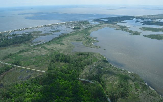 Aerial view of the interface between open water and wetlands and a coastal forest. The water cuts meandering channels before ending at the green forested land.