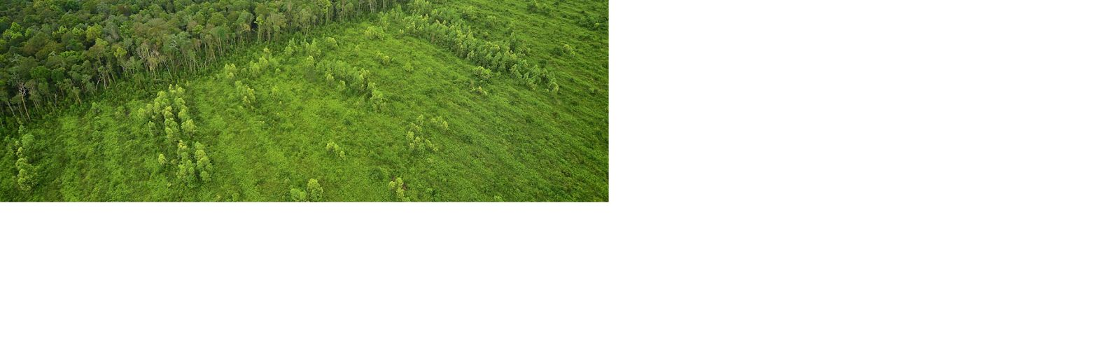 A line in the sand: aerial view of deforestation in Sumatra.