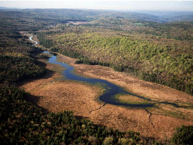 Aerial view of a river winding and branching through a forest landscape