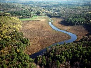 Aerial view of a river running through a forested landscape.