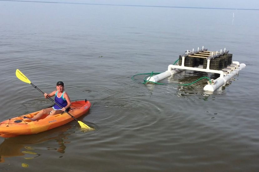 A woman in a kayak hauls an oyster rig for an Alabama farm.