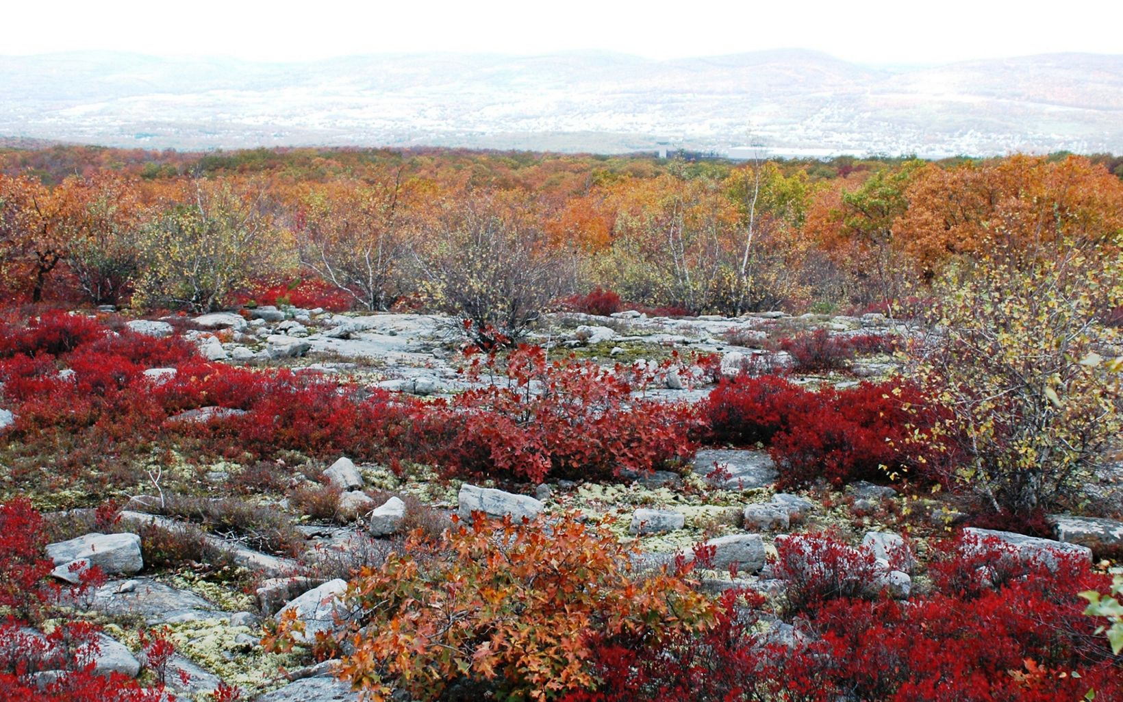 Autumn in the barrens at the Dick and Nancy Eales Preserve at Moosic Mountain