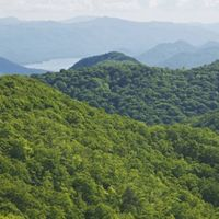 A mountain valley is covered in green trees.