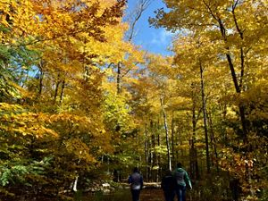 Three hikers walking on a trail through a forest in the