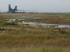 This wetland, at Dow's Seadrift facility in Texas provides protection from sea level rise and storm events.