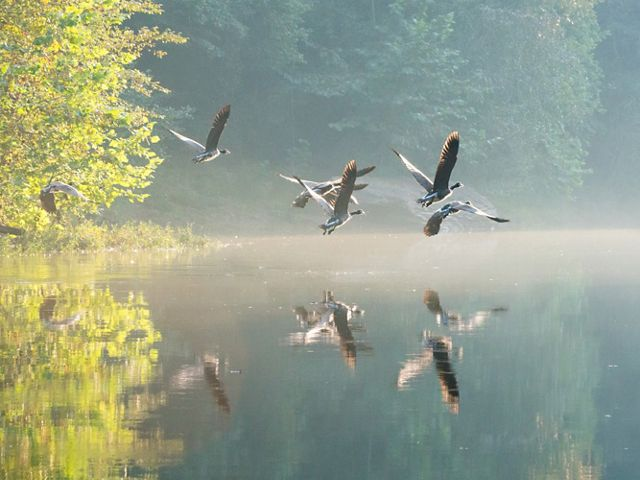 Ducks flying above the Locust Fork of the Black Warrior River.