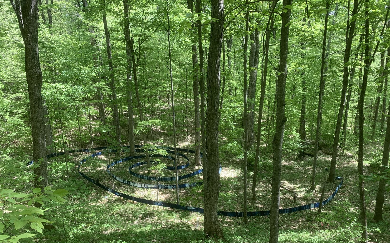 Labyrinth in Equinox Natural Area by Elizabeth Billings