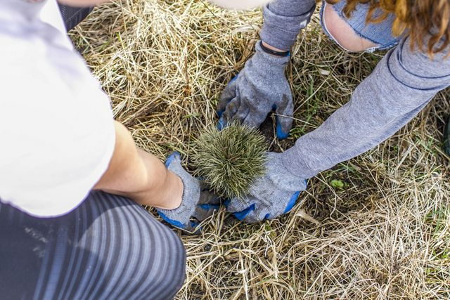 Hands planting a tree.