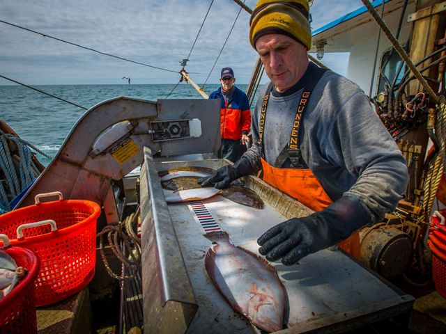 A fisherman measures his catch in view of the electronic monitoring cameras. Video reviewers will convert lengths to weight to be used for science and management.