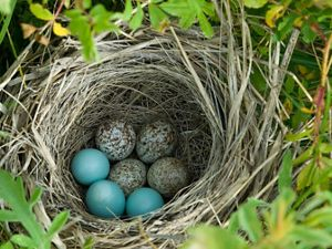 Different colored eggs in a nest