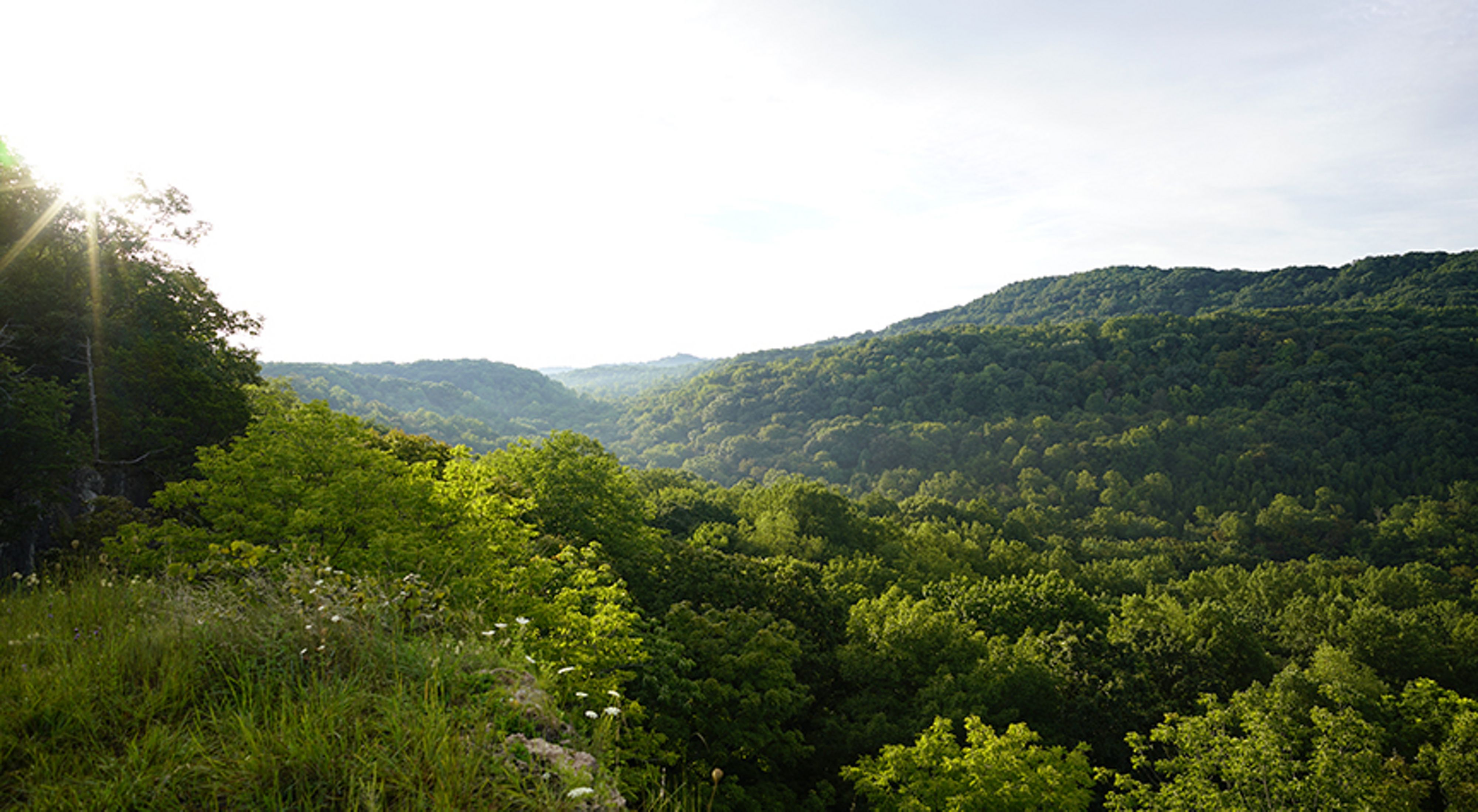 The morning sun shines over miles of overlapping forested hills with summer green foliage.