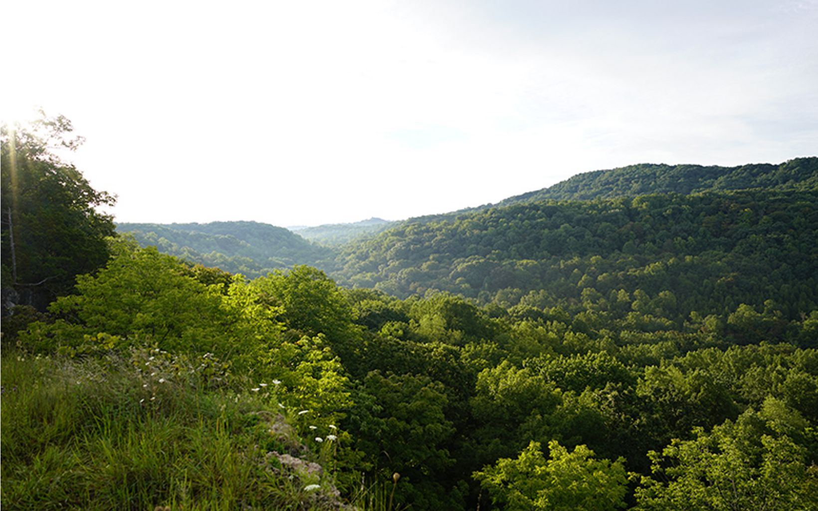 Looking over the hills of Southern Ohio that are covered in lush green forests on a sunny day.