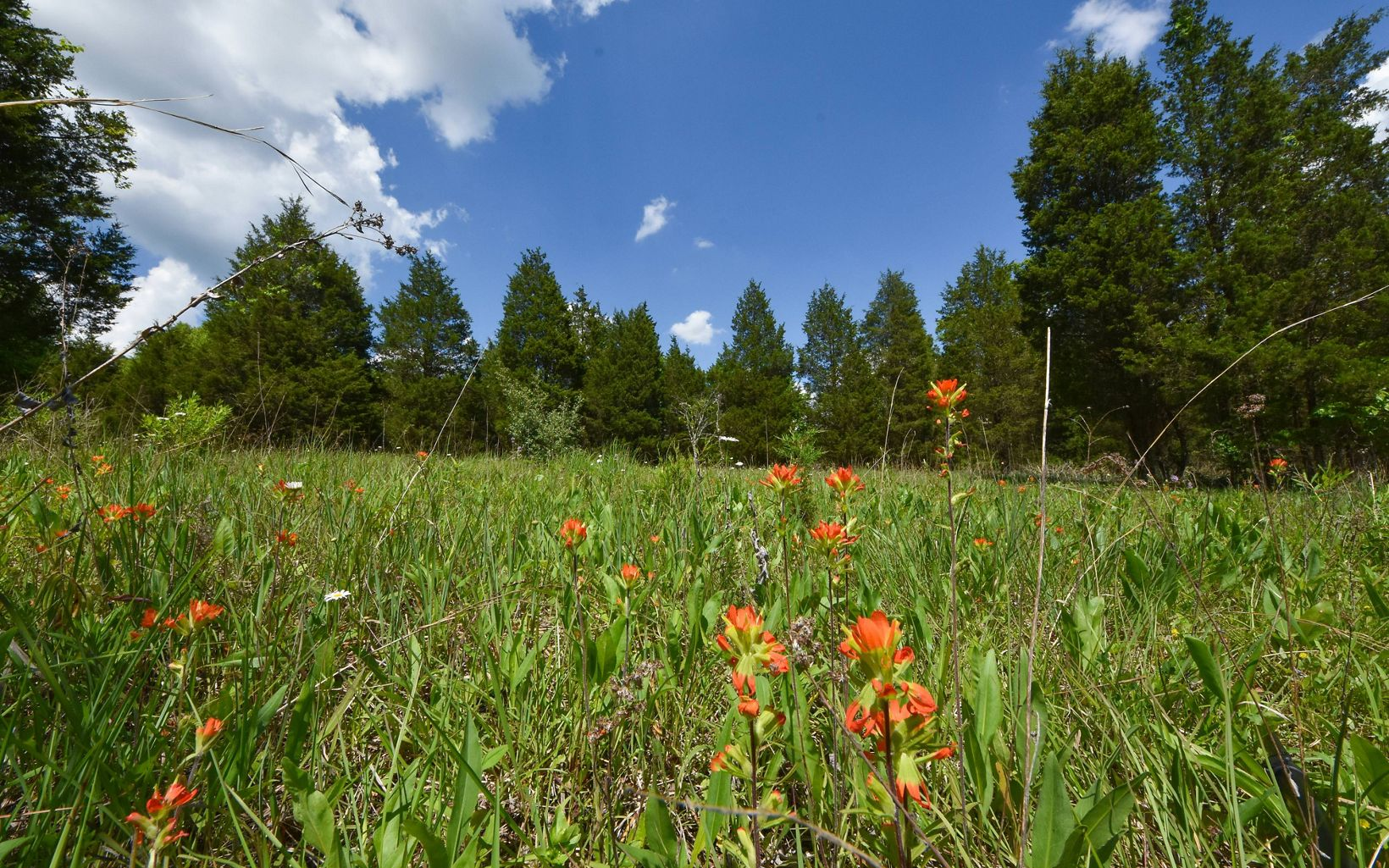Orange flowers in a meadow surrounded by trees.