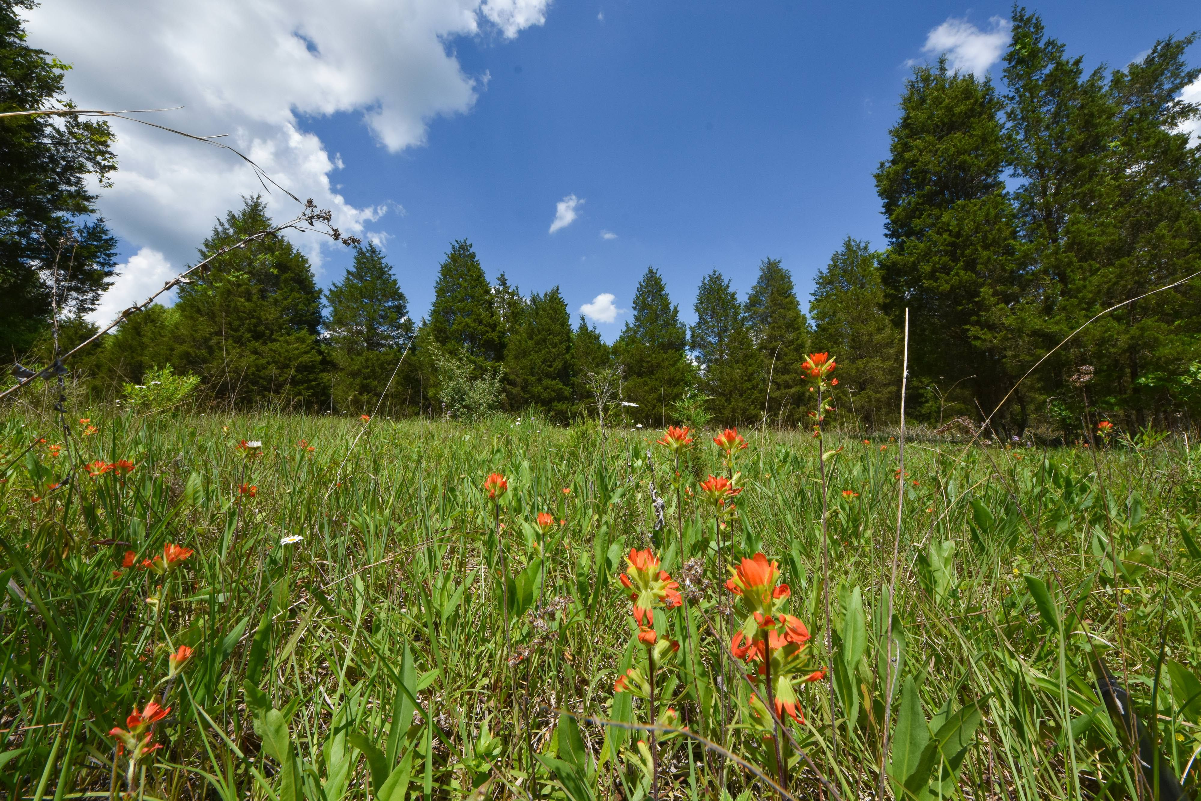 A green prairie dotted with bright scarlet flowers and surrounded by tall trees with a blue sky above.