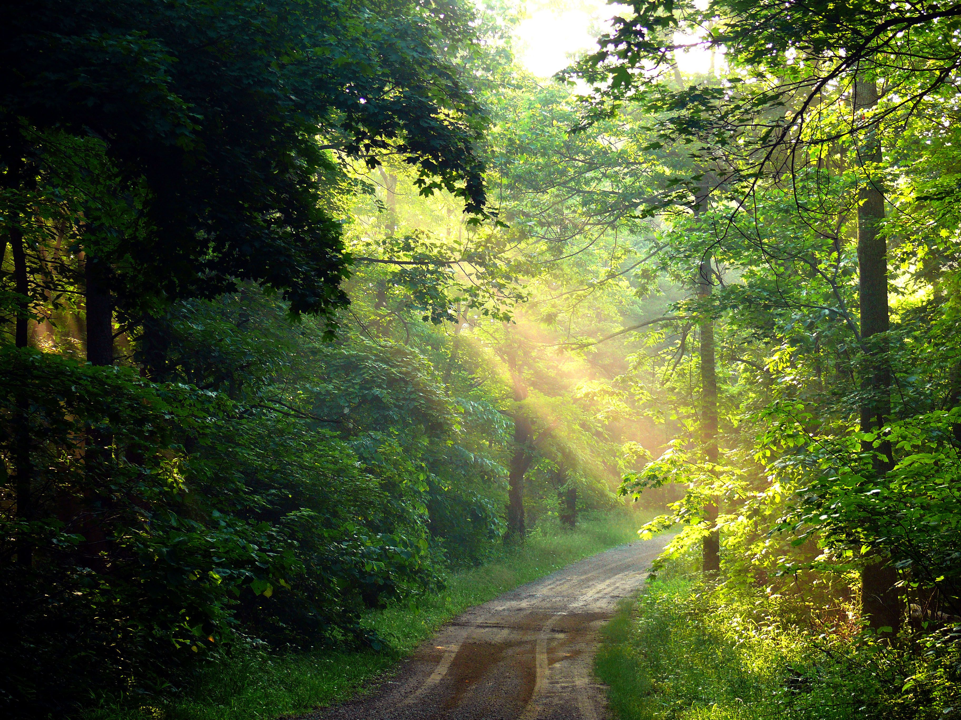 A beam of sunlight shines through the green foliage of the forest, over a small dirt country road.